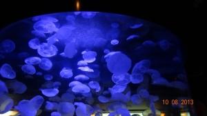 776 Vancouver Aquarium